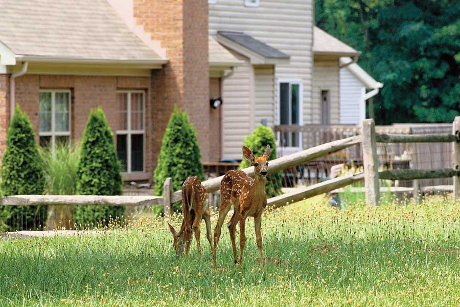 affordable plants with how to deer proof a garden