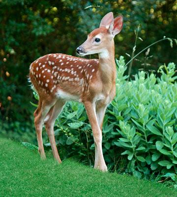 Deer Proof Garden Rock Spring Design Group Llc
