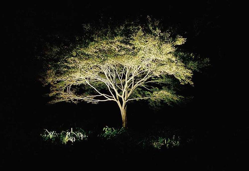 Light up the night rock spring design group llc uplighting aloadofball Images